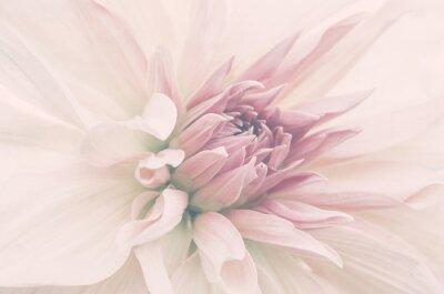 Fotomural Kwiat ze ślubnego bukietu, delikatne płatki, ujęcie macro.