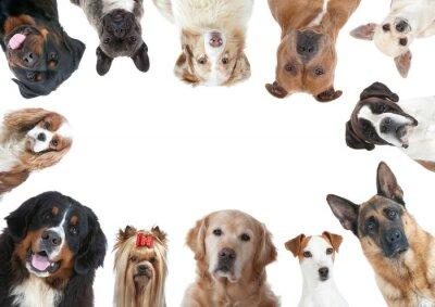 Fotomural La Grande variété des razas caninos