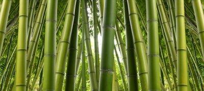 Fotomural La selva de bambú