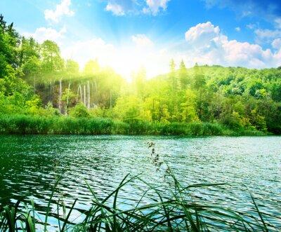 Fotomural lago en el bosque profundo