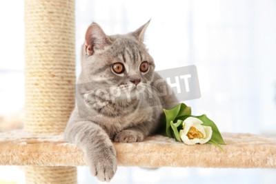 Fotomural Lindo gato acostado en sacapuntas con tulipán en sala de luz