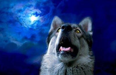 Fotomural Lobo / Lobo en la noche, seleccione enfoque en los ojos. Retoque digital.