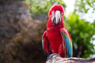 Fotomural Loro colorido, guacamayo pájaro