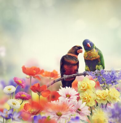 Fotomural Loros del arco iris (Lorikeet del arco iris)