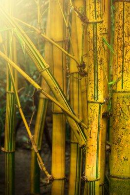 Fotomural Los árboles de bambú