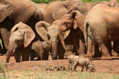 Fotomural Los elefantes ADD0 07