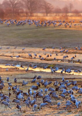 Fotomural Luz del amanecer en el campo con las grúas