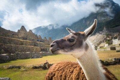 Fotomural Machu Picchu, sitio del patrimonio mundial de la UNESCO. Una de las Nuevas Siete Maravillas del mundo