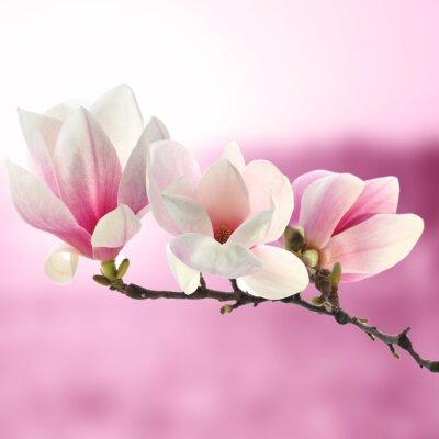 Fotomural magnolia