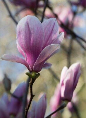 Fotomural Magnolia fleur