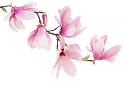 Fotomural Magnolia primavera Flores rosadas sucursal