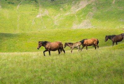 Fotomural Manada de caballos caminando por un prado de montaña