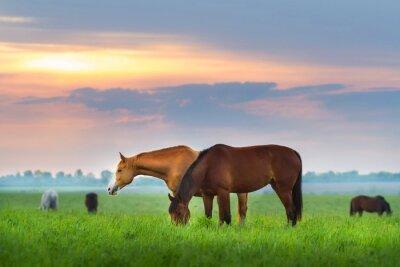 Fotomural Manada de caballos en los pastos al sol