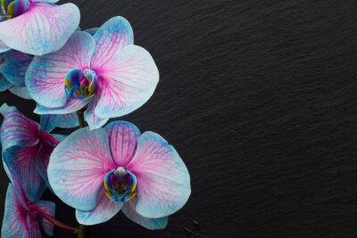 Fotomural Manojo de orquídeas violetas