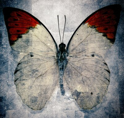 Fotomural mariposa