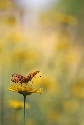 Fotomural Mariposa en el jardín