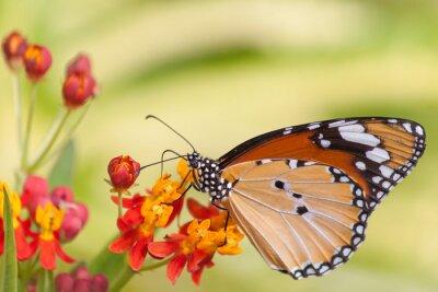 Fotomural Mariposa en la flor