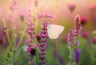 Fotomural Mariposa en la flor salvaje
