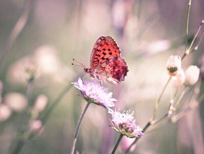 Fotomural Mariposa en la flor silvestre
