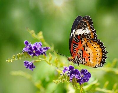 Fotomural Mariposa en una flor violeta