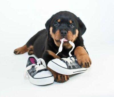 Fotomural Mis zapatos!