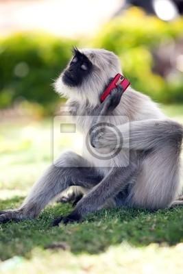 Fotomural mono está llamando