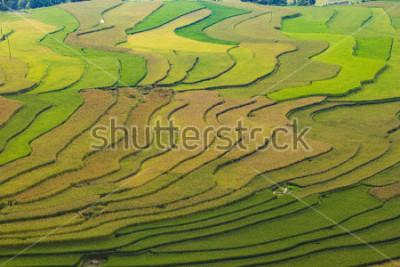 Fotomural MuCangChai,Terraced rice field in rice season in Mu Cang Chai, Vietnam