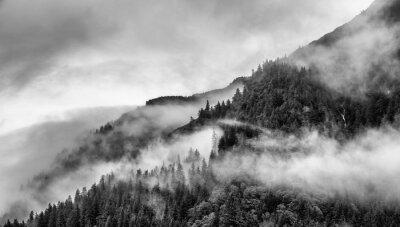 Fotomural niebla en la cima de la montaña con el árbol de pino