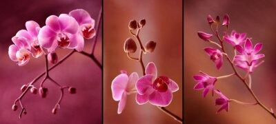 Fotomural Orchidea tryptyk w fioletach