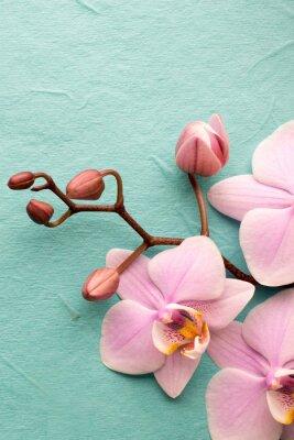 Fotomural Orquídea.