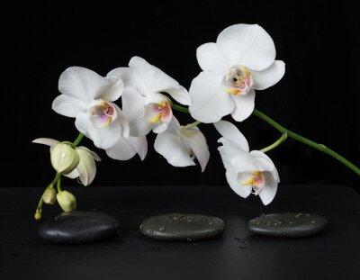 Fotomural Orquídea blanca sobre un fondo negro
