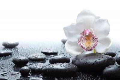 Fotomural orquídea blanca y piedras negras mojadas