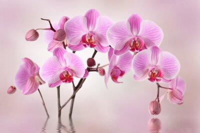Fotomural Orquídeas rosadas diseño de flores de fondo