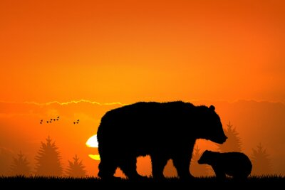 Fotomural Oso pardo y bebé oso en el bosque