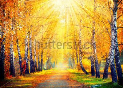Fotomural Otoño Otoño Parque otoñal. Árboles de otoño y hojas en los rayos del sol. Hermosa escena de otoño