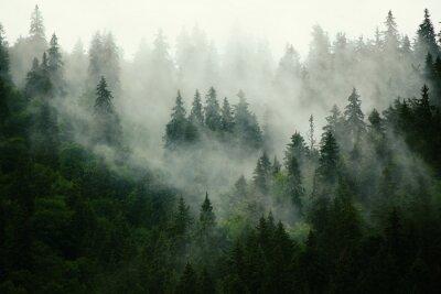 Fotomural Paisaje brumoso con bosque de abeto en el estilo retro vintage hipster