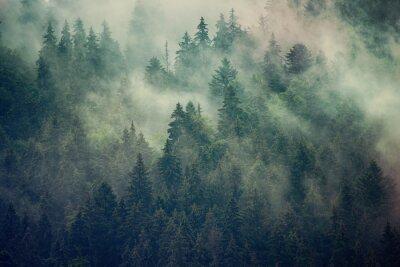 Fotomural Paisaje brumoso con bosque de abetos en estilo retro vintage inconformista