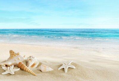 Fotomural Paisaje con conchas en la playa tropical