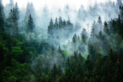 Fotomural Paisaje de montaña brumosa