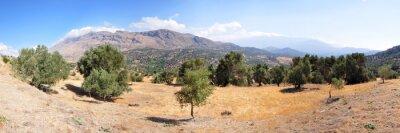 Fotomural Paisaje de olivos en la isla de Creta
