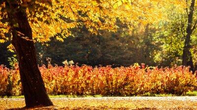 Fotomural Paisaje de otoño en el parque