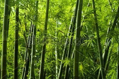 Fotomural Paisaje del árbol de bambú en la selva tropical, Malasia