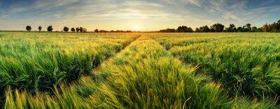 Fotomural Paisaje rural con campo de trigo en la puesta del sol