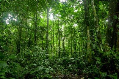 Fotomural Paisaje Selva Tropical, Amazon