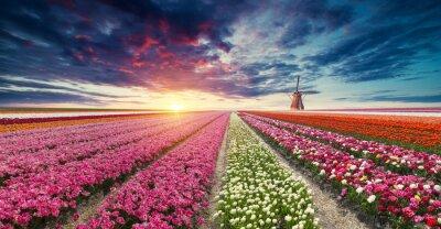 Fotomural Países Bajos
