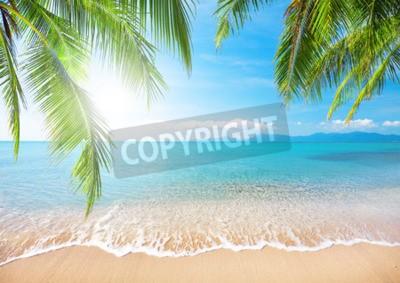 Fotomural Palm y playa tropical