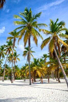 Fotomural palma