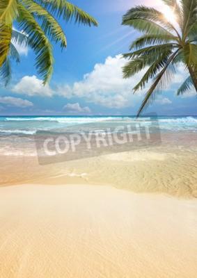 Fotomural Palmera de playa