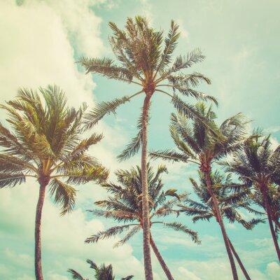 Fotomural Palmera del coco y azul cielo nubes con el tono de la vendimia.