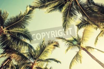 Fotomural Palmeras del coco sobre fondo brillante del cielo. Estilo vintage. La foto en tonos efecto de filtro
